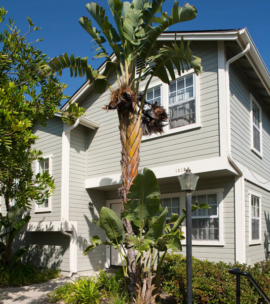 Outside view of the building with a palm tree in front of it