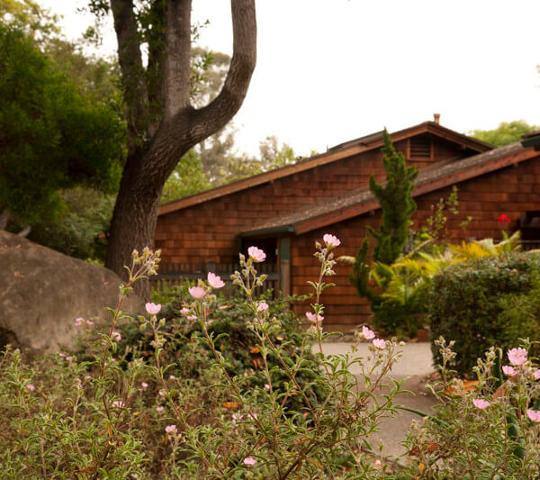 A flower bush in focus with a home in the background