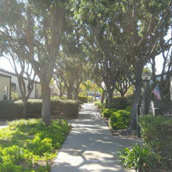 Outside view of a pathway with trees on both sides