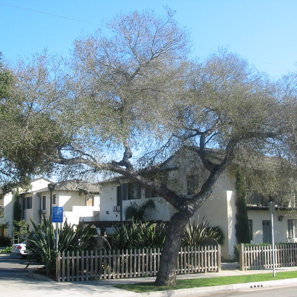 Street view of the property